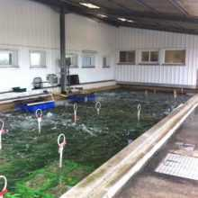 traitement bassin ostreicole